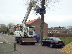 Bomen rooien Bodegraven